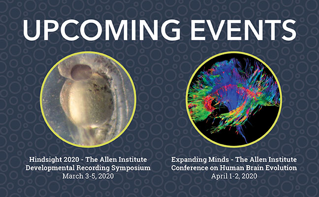 Conferences on human brain evolution and cell lineage