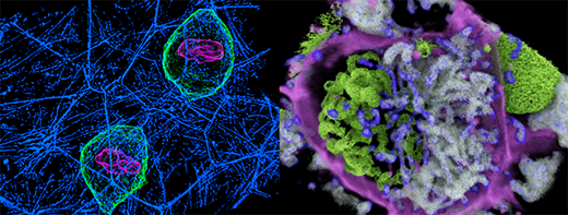 Allen Institute for Cell Science Events