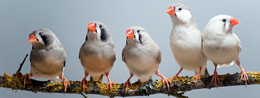 Songbird Data Stories