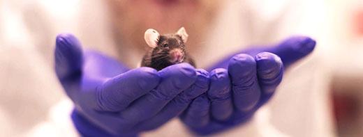 Female Mice