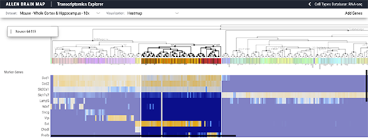 New Patch-seq data and more in latest data release