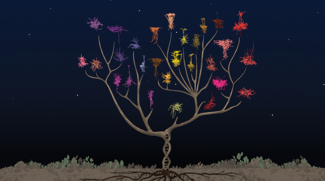 Neuron Tree