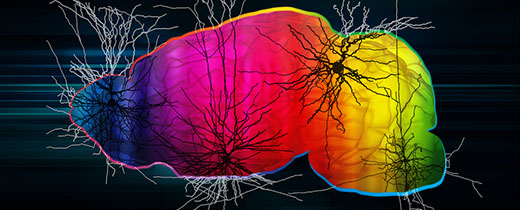 Mapping neuron types across two major structures of the mouse brain